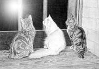 Cats looking at a star